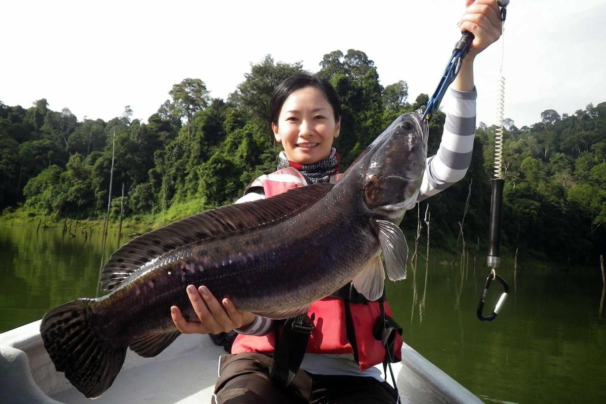 7 Kg Giant snakehead fish
