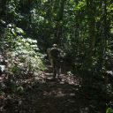 Walking in the oldest rainforest